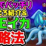 【ドラクエウォーク】『大王イカ』攻略法!おすすめ武器や防具と新こころ紹介!【DragonQuestWalk ドラゴンクエスト】